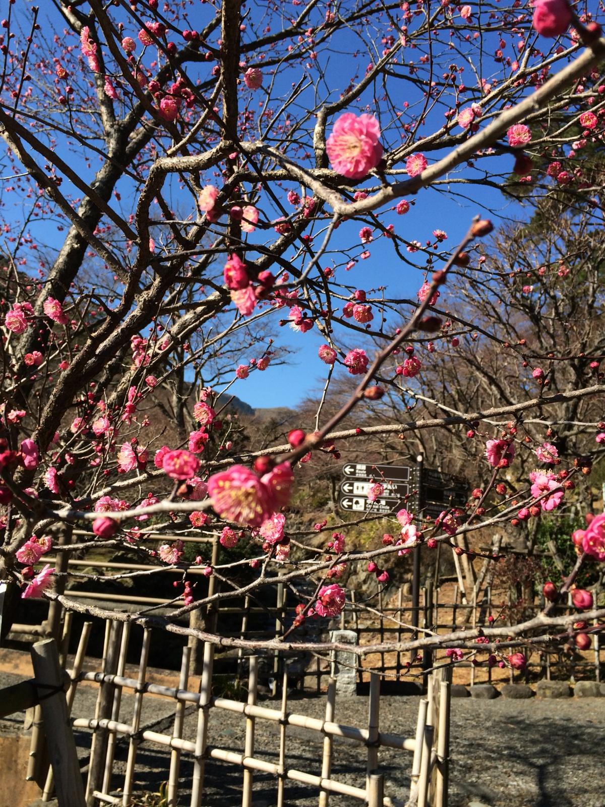 池袋美容室ナベ冬休みお花